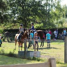 Stichting De Lynx faciliteert Ponyclub Eefde voor contact mens-dier