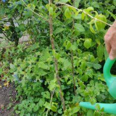 Zo help je je tuin door een droge periode heen